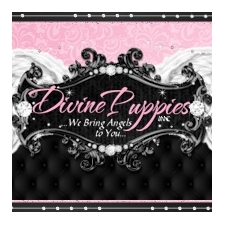 View full profile for Divine Puppies Inc.,