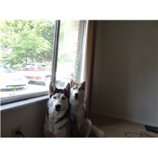 View full profile for Unlucky's Huskies