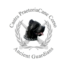 View full profile for Castra Praetoria Cane Corso