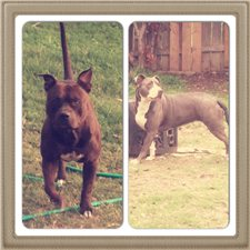 View full profile for Henry Blue Kennels