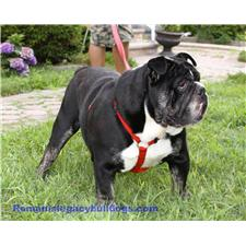 View full profile for Romanis Legacy Bulldogs