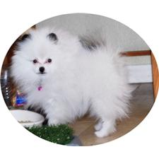 View full profile for candicoloredpoms.com