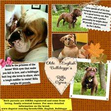 View full profile for Rilla D's Olde English Bulldogge''s