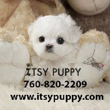 View full profile for Itsy Puppy