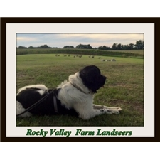 View full profile for Rocky Valley Farm (Newfoundland Landseers)