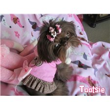 View full profile for La-Te-Da Shih Tzu