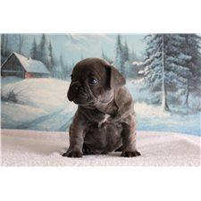 View full profile for Teddy Bear Bulldogs