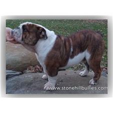 View full profile for Stone Hill Bullies