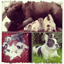 View full profile for Rosé hill Bulldogs