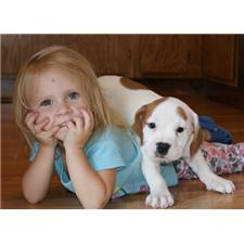 View full profile for Ozark Mtn. Puppies