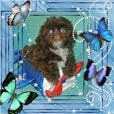 View full profile for Spring Grove Puppies