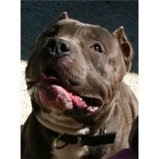 View full profile for American Bully Alliance
