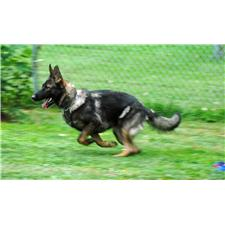 View full profile for Von Der Sturmischen Bahn German Shepherds