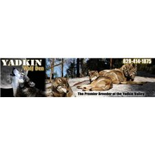 View full profile for Yadkin Wolf Den