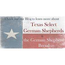 View full profile for Texas Select German Shepherds