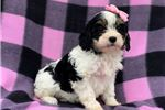 Picture of Piper (F1Mini)