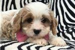 Picture of Bella (F1 Mini)