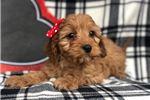 Picture of Taffy (F1 Mini)