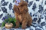Picture of Nutmeg (F1b Mini)
