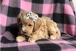 Picture of Missy (F1b Mini)
