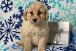 Frostine | Puppy at 13 weeks of age for sale