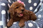 Picture of Cookie (F1 Mini)