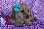 Picture of Maggie (F1b Mini)