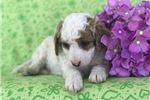Picture of Winnie (F2b Mini)
