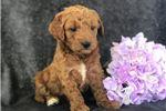 Picture of Zoey (F2b Mini)