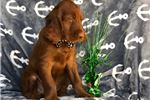 Picture of Whisky (Champion Bloodlines)