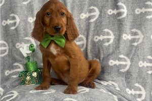 Picture of Guinness