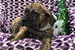 Picture of Rayne (Champion Bloodlines)