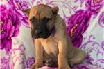 Picture of Princess (Champion Bloodlines)