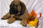 Picture of Erica (Champion Bloodlines)