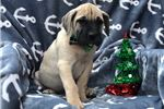 Picture of Mack (Champion Bloodlines)