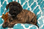 Picture of Marlene (Champion Bloodlines)