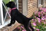 Picture of Liberty (Presa Lab Mix)