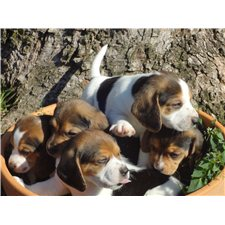 View full profile for Robbins Beagles
