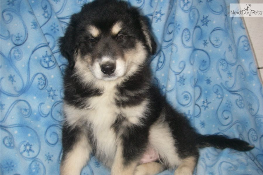 Winston: Mixed/Other puppy for sale near Lancaster
