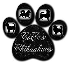 View full profile for Coco's Chihuahuas