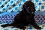 Picture of Jackson AKC