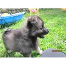 View full profile for Slokeeshond