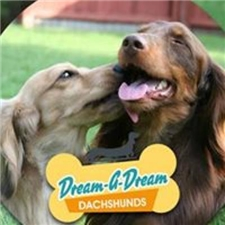 View full profile for Dream A Dream Dachshunds