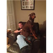 View full profile for Absolute Dobermans