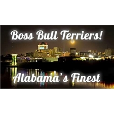 View full profile for Boss Bull Terriers
