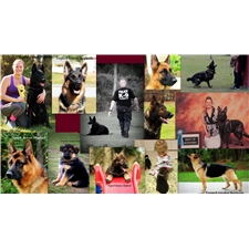 View full profile for Tropisch German Shepherds