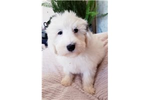 Picture of Ttoodle