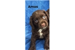 Picture of Amos