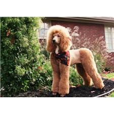 View full profile for Poodle Elements
