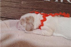 Picture of Male Orange Coll